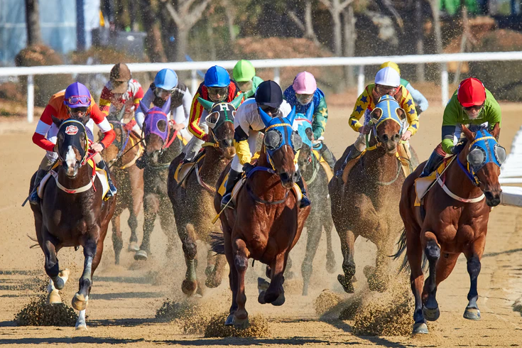 5 best tips To Bet on Horse Racing to Win