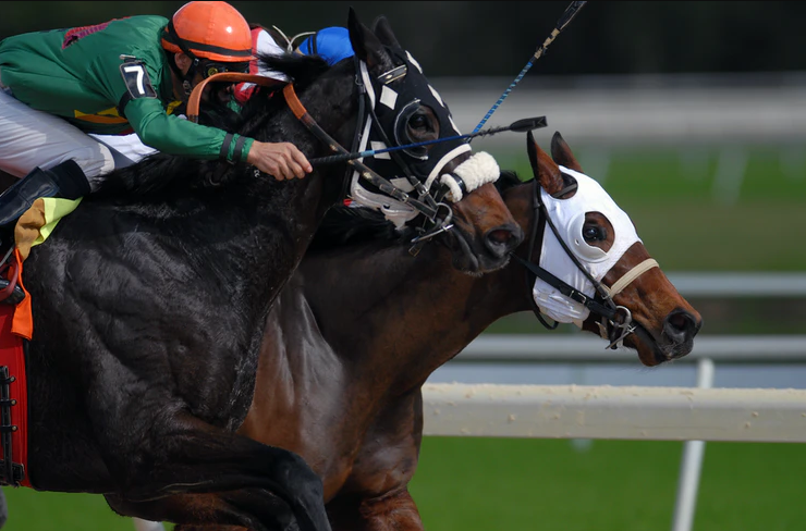 Horse Racing Odds Singapore