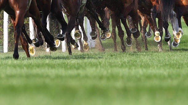 Bets on the right horse in horse racing