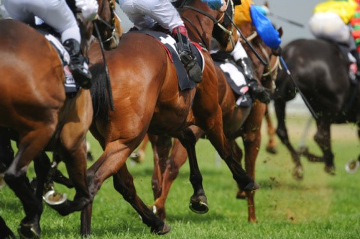 Tips On How To Bet On Horses And Win